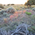 Sage Brush and Friends
